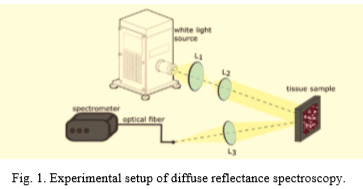 Intra-class variability in diffuse reflectance spectroscopy: application to porcine adipose tissue