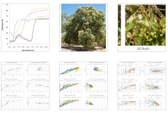 Simple remote sensing detection of Corymbia calophylla flowers using common 3 –band imaging sensors